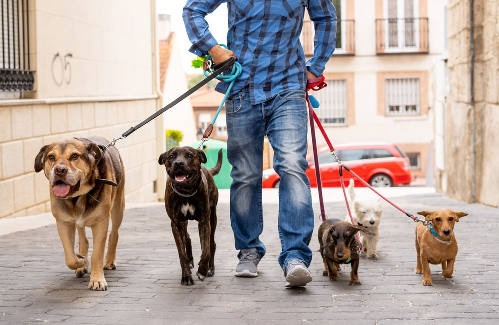 dog walking is a good part time jobs for college students